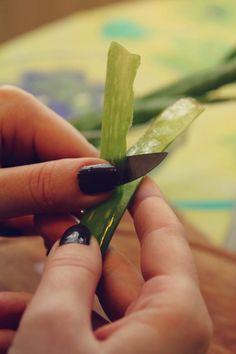 Fotonávod na prípravu mastičky z Aloe Vera alebo O lekárni v kvetináči / Antoinette » SAShE.sk - slovenský handmade dizajn Aloe Vera, Fruits And Veggies, Korn, Natural Beauty, Detox, Health Fitness, Herbs, Cosmetics, Ale