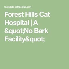 "Forest Hills Cat Hospital | A ""No Bark Facility"""