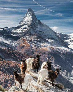 Plan your trip to Zermatt- but check this must-read guide before doing so! All you need to know before you visit Zermatt is here. Switzerland Destinations, Switzerland Vacation, Zermatt, Places To Travel, Places To Visit, Photo Animaliere, Mountain Landscape, Amazing Destinations, Travel Destinations