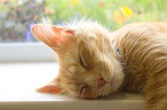To sleep, perchance to dream- | photogenic felines & canines