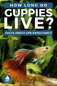 Tropical Freshwater Fish, Freshwater Aquarium, Tropical Aquarium, Aquarium Fish, Floating Plants, Fish Stock, Stress Causes, Guppy, Live Long