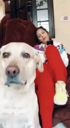 Animals Discover Even dogs cant resist when the beat drops Funny dog videos Animal Humour, Animal Jokes, Funny Animal Memes, Funny Animal Pictures, Funny Dog Memes, Cute Funny Dogs, Cute Funny Animals, Cute Baby Animals, Funny Pets