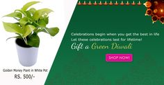 """Let's fill our homes with prayers & lights, not with fumes & crackers! Celebrate """"Green Diwali"""" #Diwali #Greendiwali #Diwaligifts #Diwalioffers"""