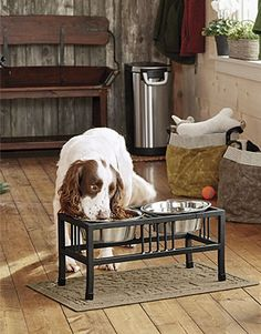 online shopping for Orvis Mission-Style Double Feeder/Double Feeder from top store. See new offer for Orvis Mission-Style Double Feeder/Double Feeder Elevated Dog Bowls, Raised Dog Bowls, Raised Dog Feeder, Dog Bowl Stand, Dog Stroller, Best Dog Training, Puppy Food, Dry Dog Food, Dog Feeding