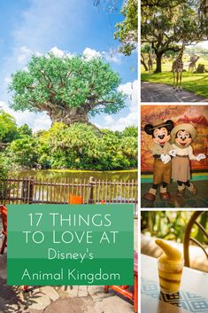 17 Things to Love at Disney's Animal Kingdom | Rolling with the Magic