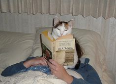 gatos-atrapalhando-leitura-7