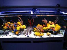 Mariusz' sun coral reef is an azoox coral paradise