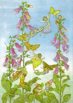 Fairies and Foxgloves by Molly Brett #foxglove #foxgloves #digitalis #fairies