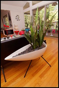 "this plant is one of my favs! It's common name is ""Mother In Law's Tounge"" according to my Landscape Architect Dad! Another reason to love the plant. Mid-Century modern planter, Atomic tripod planter"
