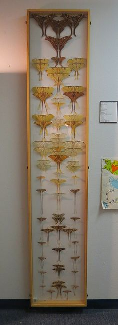 Taxidermy - Tall Display - (winged, creatures, bug museum) -