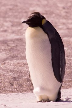Antarctica14478 - print