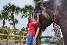 Two Tails Ranch: All About Elephants located in Williston, Florida near Gainesville is a privately owned elephant ranch. Come take an educational tour! Old Florida, Florida Travel, Red Footed Tortoise, All About Elephants, Native Country, Educational Programs, African Elephant, Zebras, Williston Florida