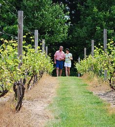 Southeast Michigan Pioneer Wine Trail: 60 miles west of Detroit