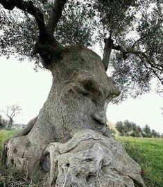 Weird Trees, Spooky Trees, Dame Nature, Tree People, Tree Faces, Old Trees, Unique Trees, Nature Tree, Flowers Nature