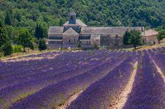 Provence | Lavender Fields | Fotopedia Magazine