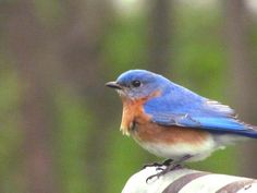 Flaps stable...Check...Rudder down.... Check....Bluebird Photographed by Doris Glander