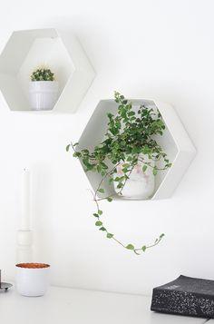 Wall Hexagon Plant Shelves