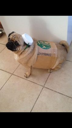 Have you tried the pugkin spice latte!?