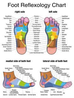 Foot Reflexology Chart                                                                                                                                                                                 More