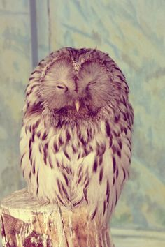 I would like an owl that is tame and dead cool and everything it does is like really cool and I want it to look like this and it will be awesome and mine.