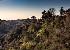 Greens - Pasadena CA  #school3y #losangeles #photography #igers #usa #instagood #art #follow #photographyislife #lds #mormon #ldsphotographer #canon #ldsart #photo #photos #pic #pics #picture #photographer #pictures #snapshot #beautiful #instagood  #photooftheday #photodaily  #photooftheday #pasadena