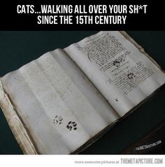 Cats have always been the same…