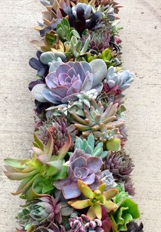Succulents | Images courtesy of Sarah Freihofer, The Upper Valley. For more recommendations on house plants, have a read of her indoor plant guide.
