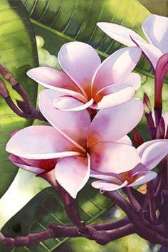 """""""Lawai Plumeria III"""" watercolor by Kathleen Alexander"""