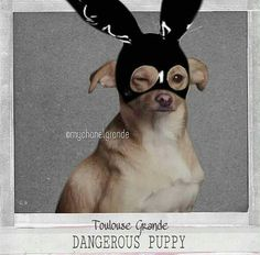 Image discovered by Ariana Grande. Find images and videos about ariana grande and dogs on We Heart It - the app to get lost in what you love. Ariana Grande Meme, Ariana Grande Pictures, Nicki Minaj, Ariana Grande Wallpaper, Dangerous Woman, Toulouse, My Idol, Cute Animals, Star Wars