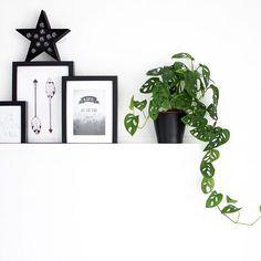 """Nog zo'n leuke, hippe interieur plant: Monstera oftewel gatenplant. In allerlei soorten en formaten te koop in de meeste tuincentra maar ook heel makkelijk zelf te stekken. Ik heb drie soorten Monstera's thuis: de welbekende """"Monstera Deliciosa"""", de monkey mask """"Monstera Obliqua"""" en sindskort de felbegeerde groen met witte """"Monstera Variegata"""". Qua verzorging is hij …"""