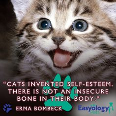 That is one of the most admirable qualities about cats, they are never afraid to be themselves!  #Cats #EasyologyPets #CatLover #Kitties http://www.mainecoonguide.com/maine-coon-personality-traits/