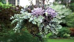 Succulent hanging basket - Purple roses, string of bananas, pastel collections, and golden glows do especially well