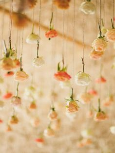 Drop ceiling made from individual rose stems each hanging upside down from a string / thread.    david jenkins photography