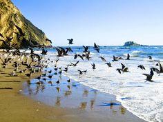 Splendid Beaches in California - Sonoma Coast State Beach