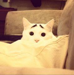 Foto Sam, il gatto con le sopracciglia conquista il web - 1 di 10 - Repubblica.it
