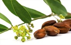 Jojoba Oil: this oil is an enigma, if one looks at the chemical structure you would expect it to be a wax. Nature's only liquid wax has some extraordinary properties, since it has the protective power of a wax but with the light emollient softness of oil. It is reported in literature to alleviate minor skin irritations and to be effective in the treatment of dry and sore skin. Jojoba is a good solvent for sebum and is used to control and complement this skin's natural moisturizing factor…