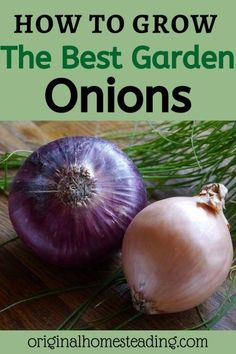 10 Herbs That Repel Garden Pests. Insects and animals can be a problem when it comes to growing a successful garden. Plant herbs to repel the insects. Garden Soil, Edible Garden, Growing Vegetables, Fruits And Vegetables, Veggies, Gardening For Beginners, Gardening Tips, Onion Benefits Health, Green Onions Growing