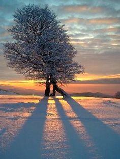 Winter sunset - love nature ~