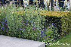 Ogród niby nowoczesny ale... - strona 1087 - Forum ogrodnicze - Ogrodowisko