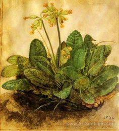 DURER Albrecht - German painter/engraver (Neurenberg 1471 - 1528) ~