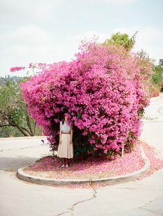 Bougainvillea - one of my favorite flowers Pretty In Pink, Beautiful Flowers, Plantar, Planting Flowers, Flower Arrangements, Blooming Flowers, Pink Flowers, Bequia, Flower Tree