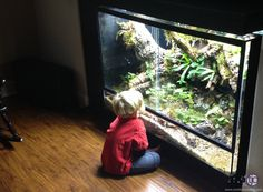 OK, they're amphibians, but this dart frog set up is amazing.