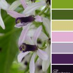 White Cedar color scheme from Clever Chameleon