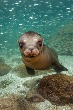 Baby Sea lion #photography