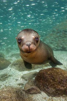 SeaLion - Baja California By James Scott