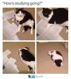 """20 Cat Memes To Remind You That Those Little Devils Are Always Up To No Good - Funny memes that """"GET IT"""" and want you to too. Get the latest funniest memes and keep up what is going on in the meme-o-sphere. Best Cat Memes, Funny Cat Memes, Dankest Memes, Funny Cats, Meme Meme, College Memes, Cats Diy, Cool Cats, Cat Lovers"""