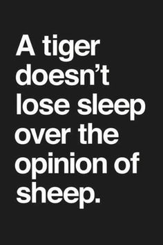 A tiger never loses sleep over the opinion of sheep