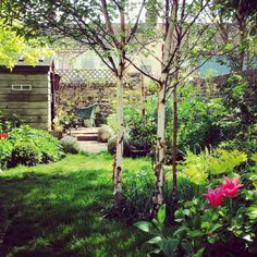 The 8 best perfect-for-privacy garden trees Privacy Trees, Privacy Plants, Garden Privacy, Privacy Landscaping, Garden Shrubs, Garden Trees, Trees To Plant, Landscaping Contractors, Back Gardens