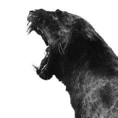#black #blacktime #blackaesthetic #blackcolor #blackonblack #blacktattoo #blackstyle #instablack #blackbeauty #blackandwhite #inblack #blackfashion #blackfeed #blackmode #beautiful #follow #followme #instalike #minimalism #minimal #likes #blackworld #blackgrunge #blacklove #blacklife #blackpictures #blackphotos #onlyblack #blacktumblr #allblack
