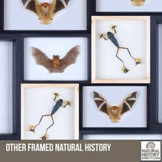 Other framed specimens - Shop the collection, website updated daily, click here now www.NaturalHistoryDirect.com